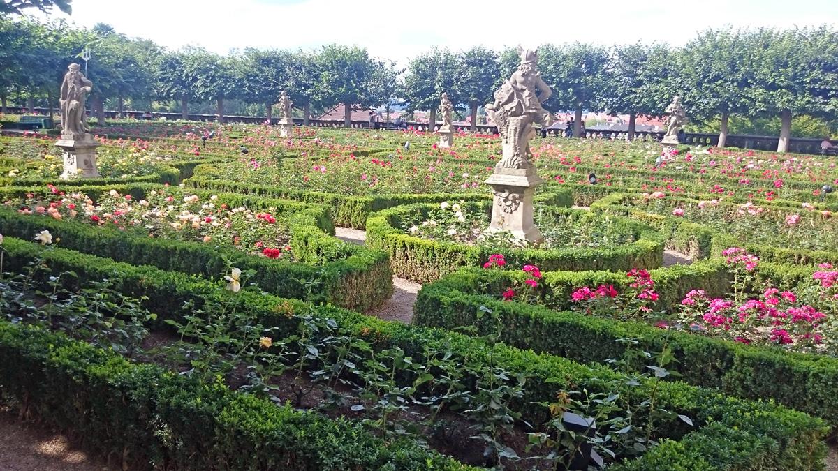 Der Rosengarten der Stadt Bamberg