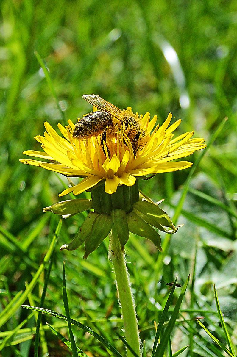 [anzeige]MEHR BEWUSSTSEIN FÜR SCHWERE ALLERGIEN – ANAPHYLAKTISCHER SCHOCK | Insektenstiche