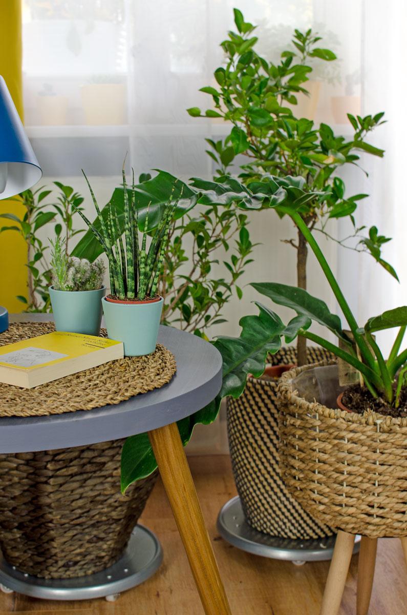 Pflanzen in der Puppenmaisonette in Potsdam [beinhaltet werbung & affiliate links]