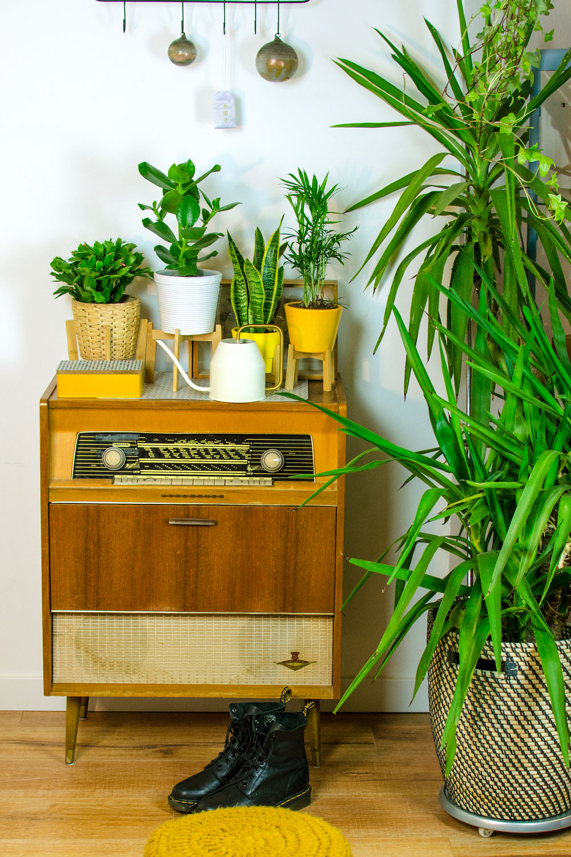 pflanzen der interior trend monstera pilea co. Black Bedroom Furniture Sets. Home Design Ideas