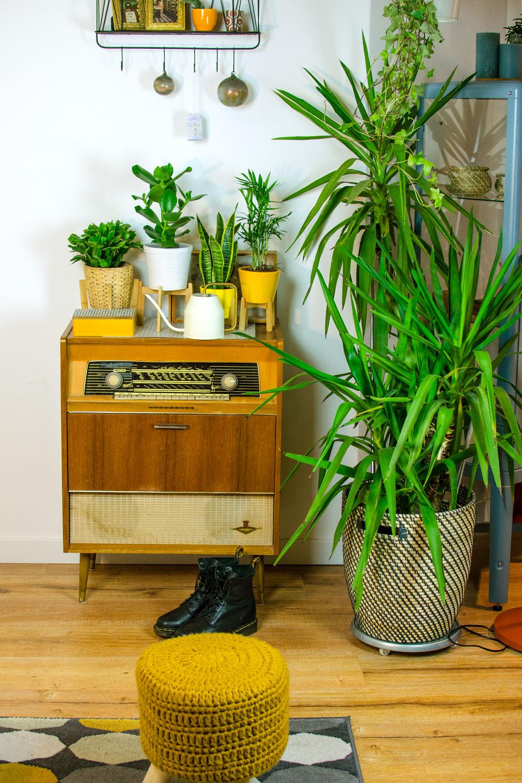 [anzeige]Plant Styling & Pflanzenliebe: Dein Urban Jungle daheim