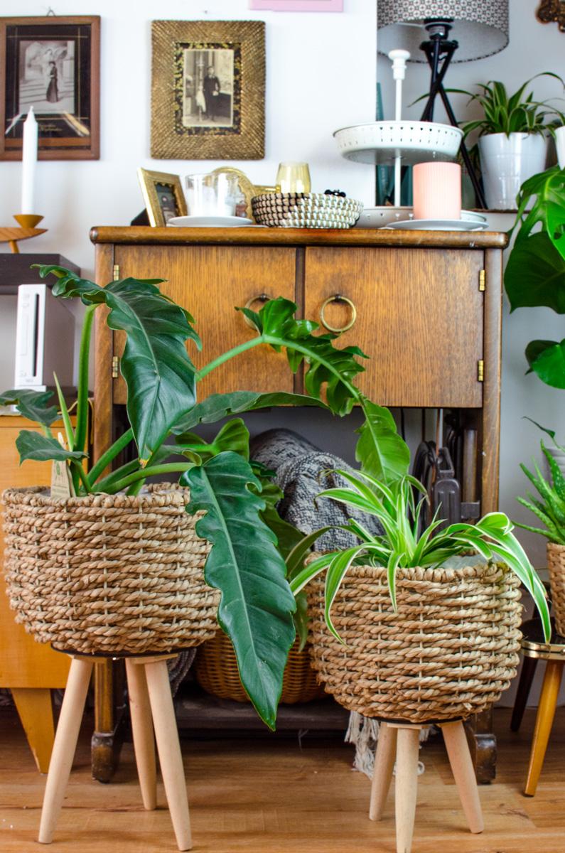 [unbeauftragte werbung]Blumenkästen, Pflanzgefäße und Übertöpfe für deinen Urban Jungle