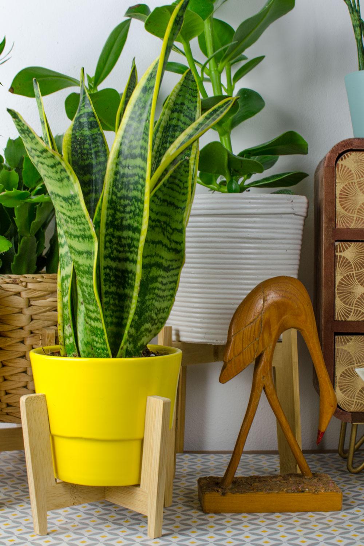 [unbeauftragte werbung]Pflanzen | Der Interior-Trend | Bogenhanf