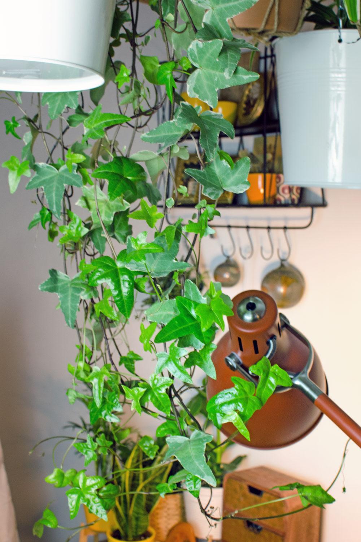 [unbeauftragte werbung]Trendpflanze Indoor Plant Efau