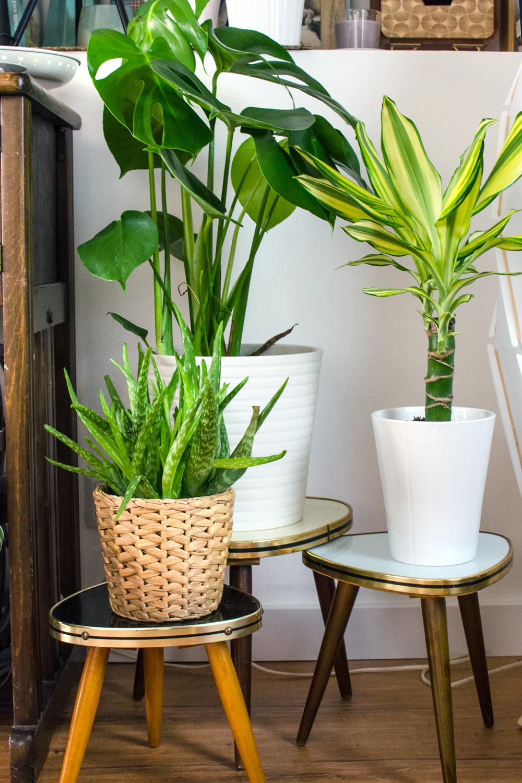 Blumentische MID CENTURY MODERN [unbeauftragte werbung]Ein Wohnstil so vintage wie trendig & aktuell