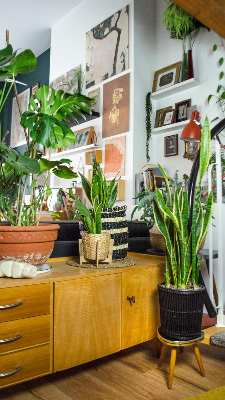 Pflanzen für den Mid Century Style