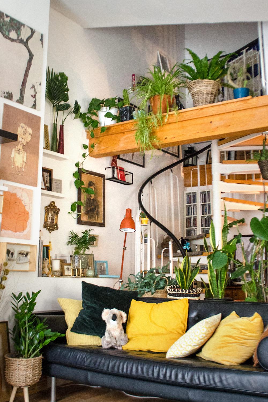 Pflegeleichte Zimmerpflanzen für deinen Urban Jungle [unbezahlte werbung]