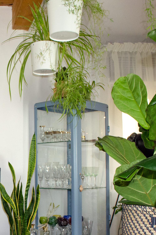 Tolle Pflanzen auch ohne grünen Daumen [unbezahlte werbung]