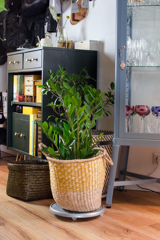 5 extravagante und pflegeleichte Zimmerpflanzen, die Eindruck machen! [affiliate links / unbeauftragte werbung]/ Glücksfeder / Zamioculcas zamiifolia