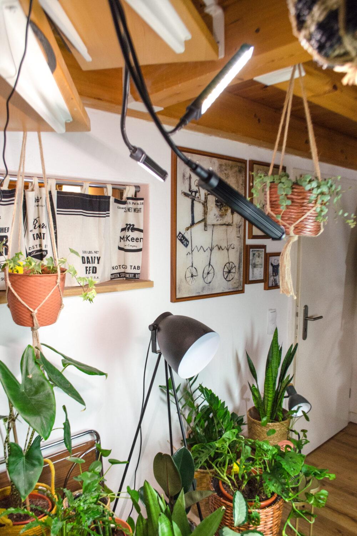 Pflanzenlampen | Unnötig oder wichtig? [unbezahlte werbung]Pflanzenpflege im Winter