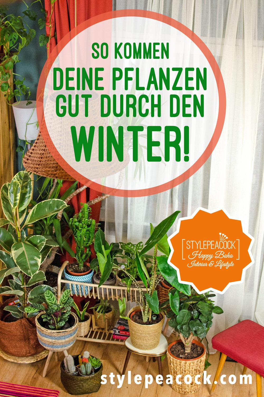 Pflanzenpflege im Winter | die besten Tipps [unbezahlte werbung]