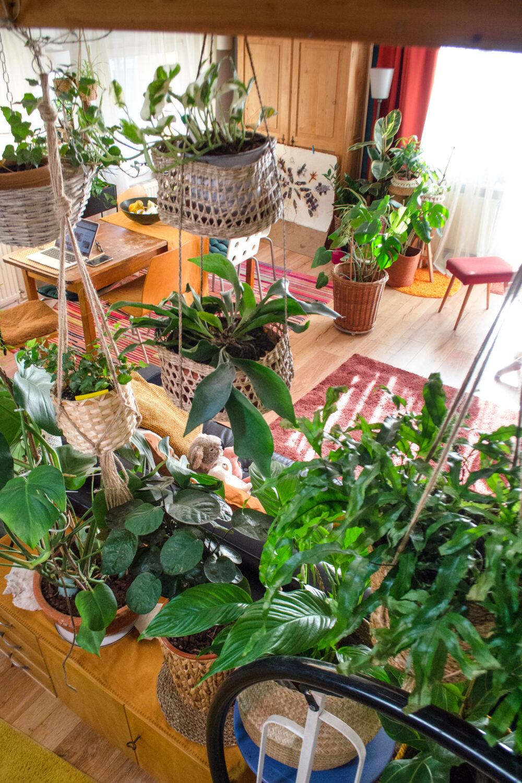 Zimmerpflanzen im Frühling: 5 wichtige Pflanzentipps
