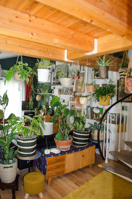 Pflanzen für den Bohemian Style [unbezahlte werbung]