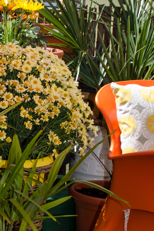 Bienenfreundlicher Balkon mit Bee [eco]