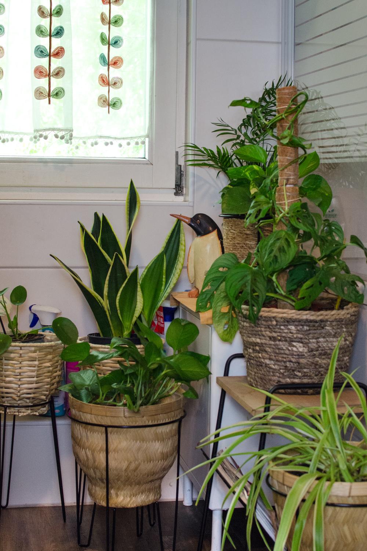 Gießtipps: Tolle Zimmerpflanzen durch richtiges Gießen [beinhaltet affiliate links / werbung]