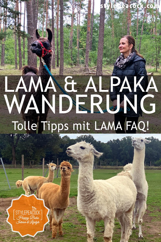 Lama und Alpaka Wanderung bei Berlin in Brandenburg